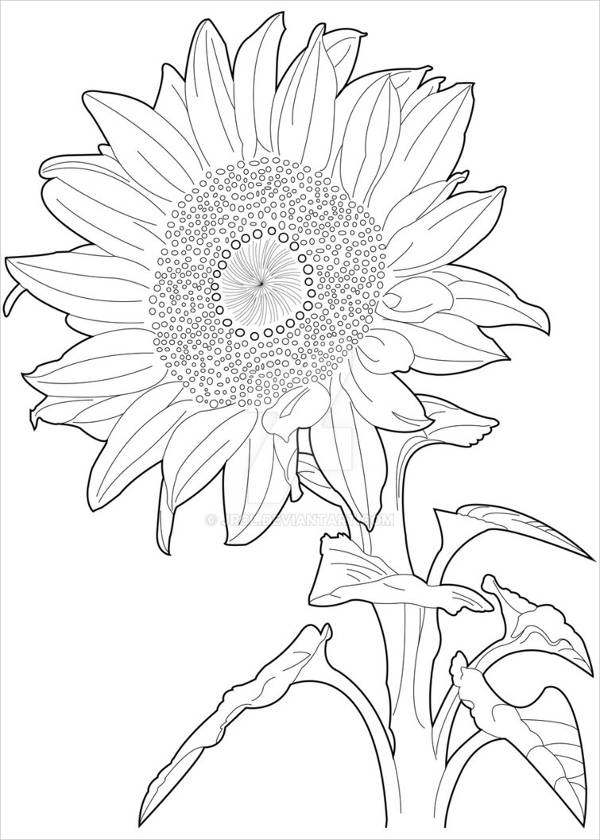 600x840 Sunflower Drawings