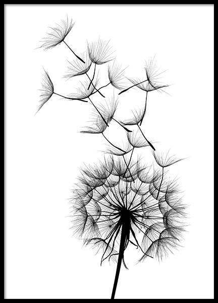 432x600 Dandelion Sketch