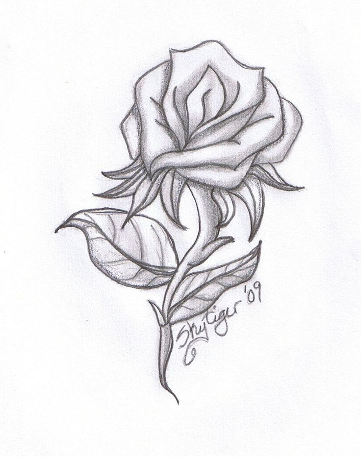 Beauty And The Beast Rose Drawing At Free For