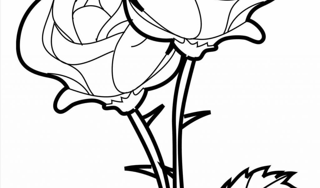 1024x600 Rose Drawing Enchanted By Siarafirespark On Clipart Pencil