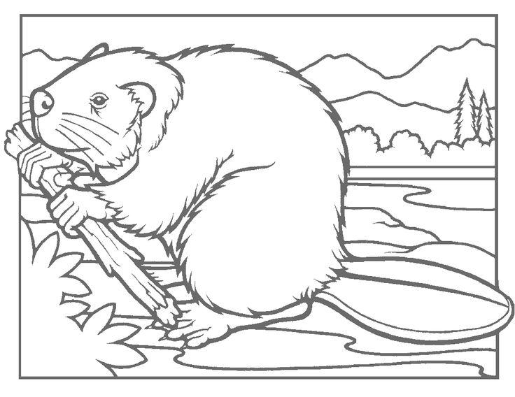 736x568 Beaver Lodge Coloring Page OSU Beavers