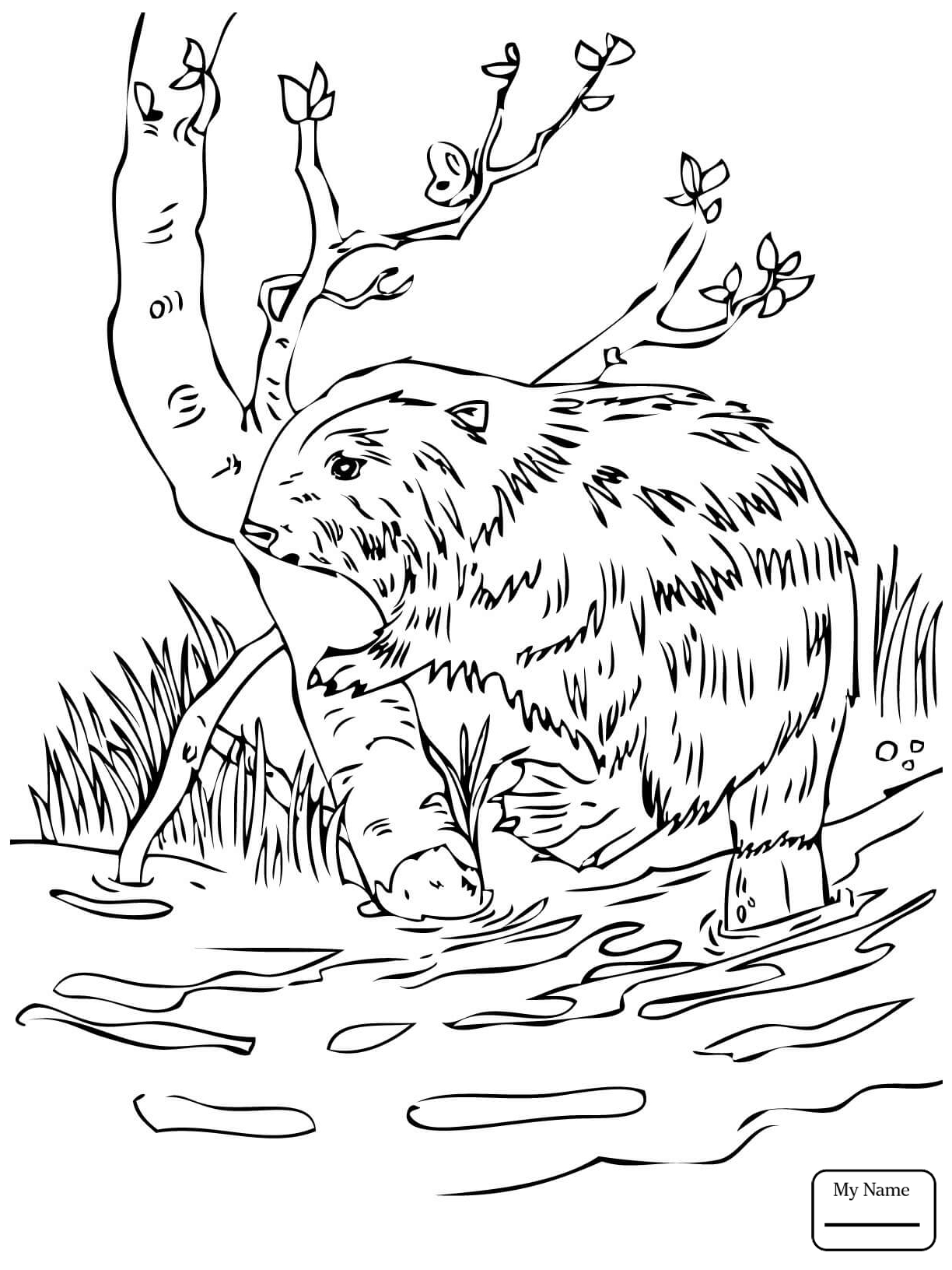 1224x1632 Beavers Mammals Beaver Dam In Voyageurs National Park Coloring