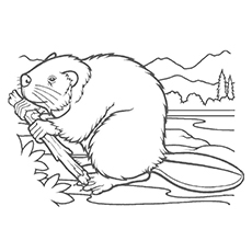 230x230 10 Best Beaver Coloring Pages For Toddlers