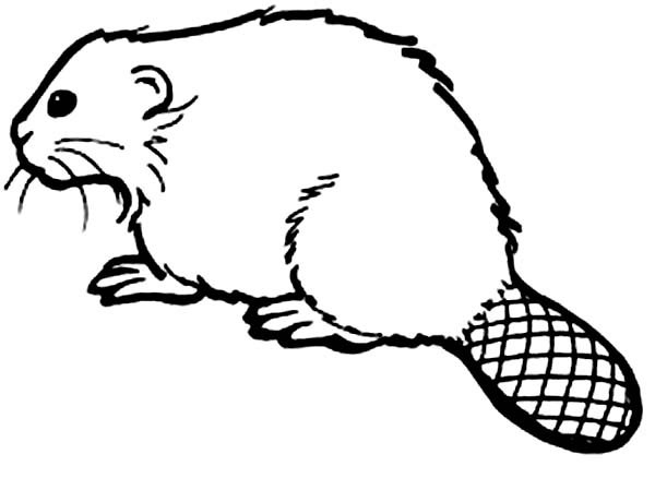 600x449 How To Draw A Beaver Coloring Page Coloring Sun