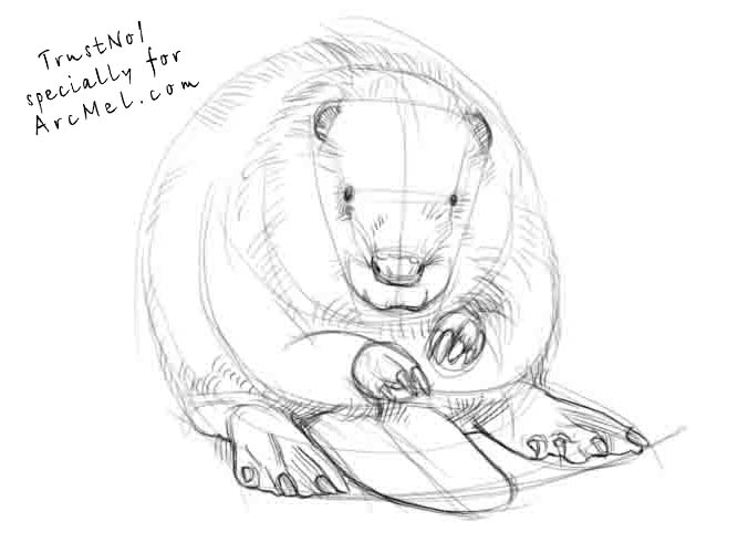 667x500 How To Draw A Beaver Step By Step