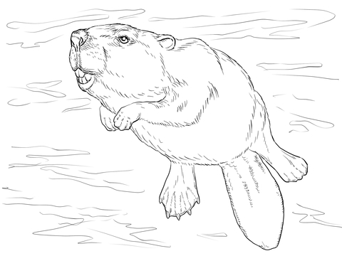 480x360 Swimming Beaver Coloring Page Free Printable Coloring Pages