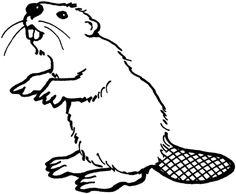 236x194 Beaver Drawing