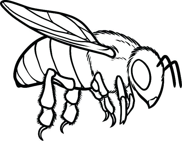 600x464 Coloring Page Bee Bee Coloring Page Plus Cute Honey Bee Coloring