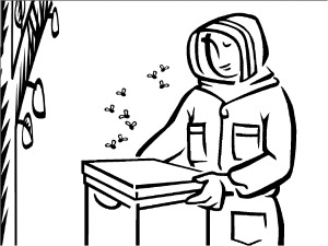 300x225 Bee Coloring Pages Educational Activity Sheets And Puzzles Free