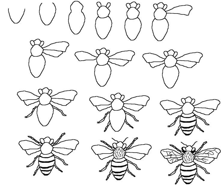 736x627 Honey Bee Drawing Step By Step