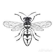 225x224 Image Result For Honey Bee Line Drawing Honey Benefits