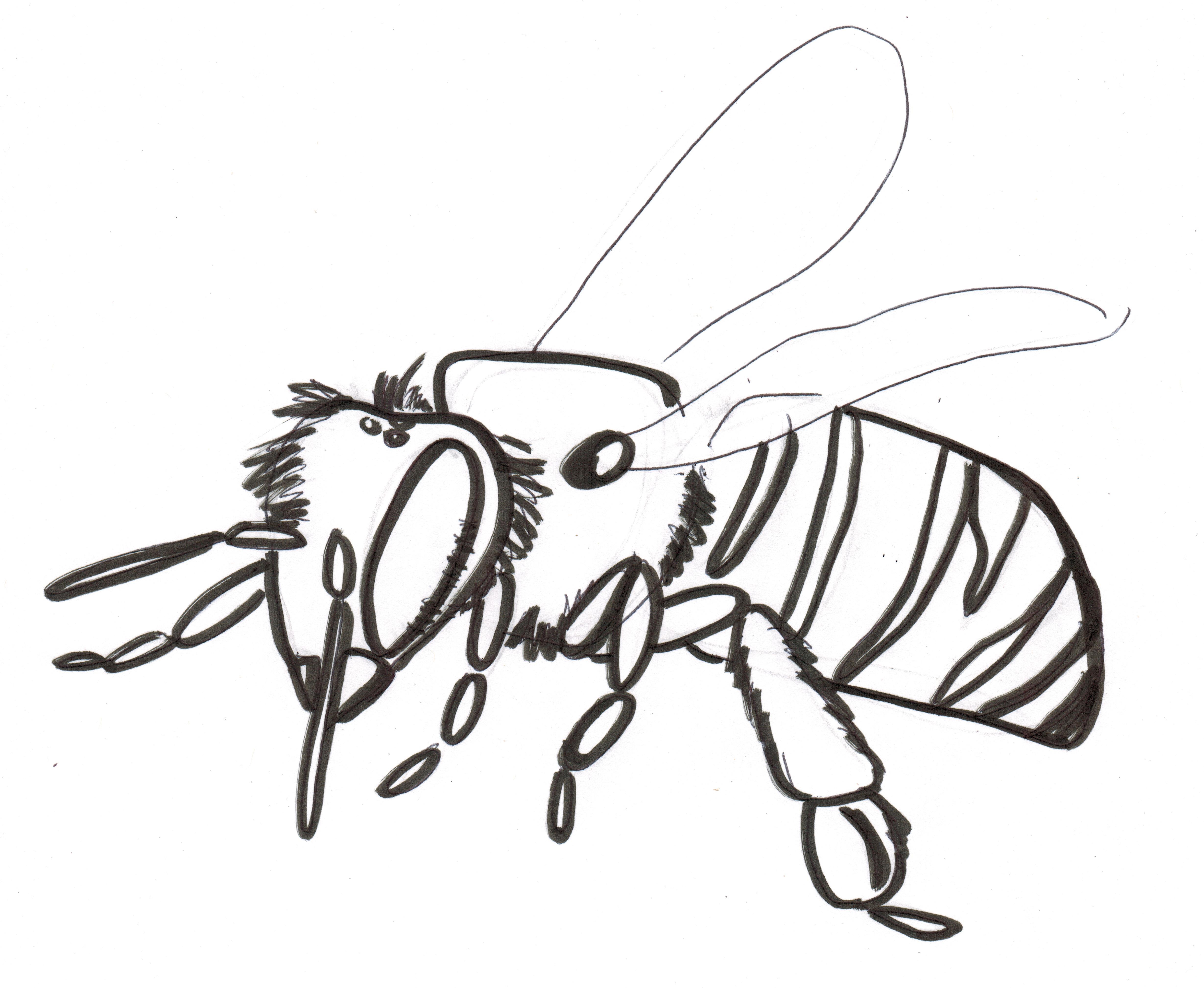 4917x4036 More) Simple Bee, Bird, And Flower Drawings Standingoutinmyfield