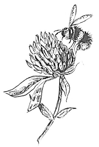 324x480 Bee Flower Drawing Animated Bee Clip Art