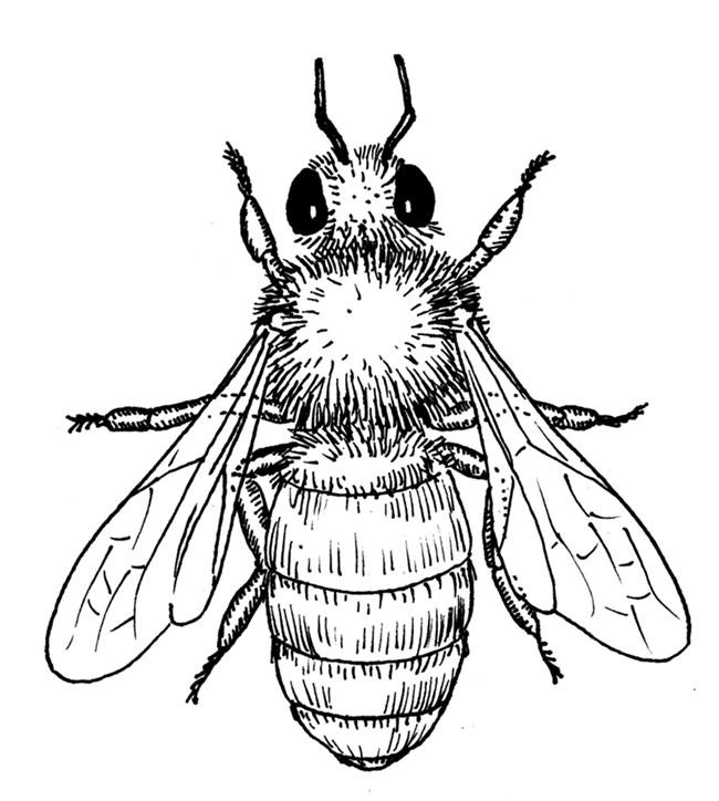 650x724 Bee Draw