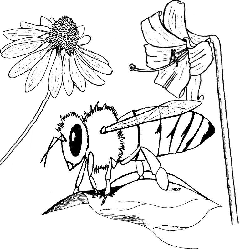 799x795 Bees! Standingoutinmyfield
