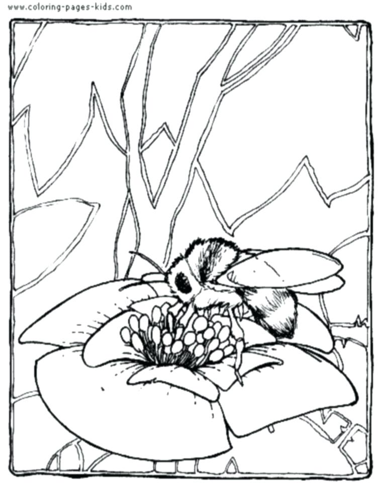 768x960 Bee Coloring Page Cartoon And Flower A To Print Out
