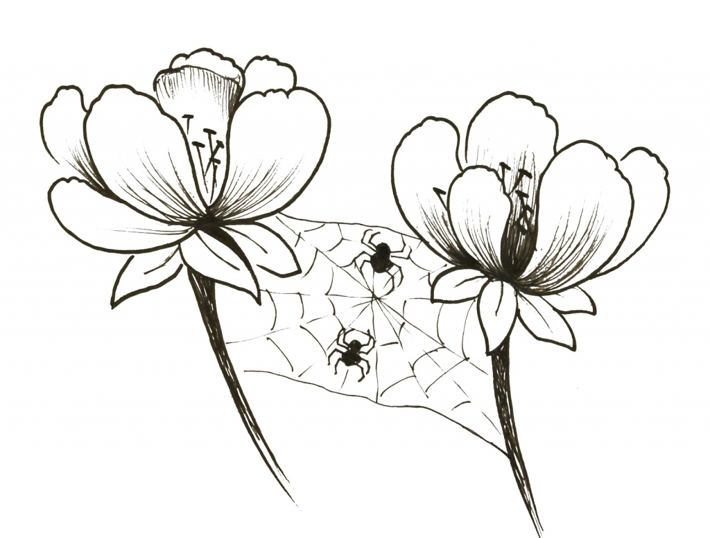 1024x776 Small Flowers Drawing