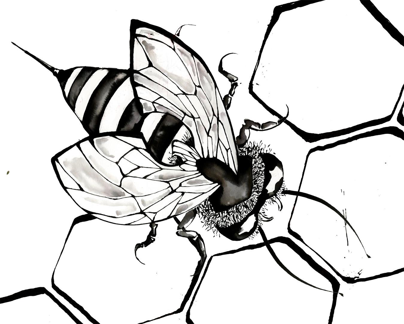 1350x1082 Bee Drawing