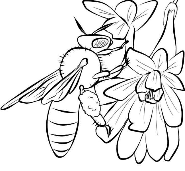 650x599 Bee Template