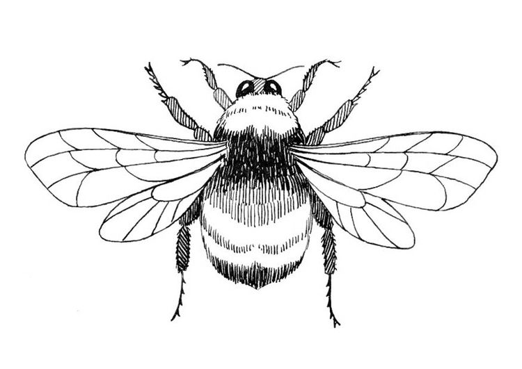 Bee Outline Drawing