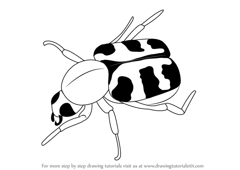 800x566 Learn How To Draw A Bee Beetle (Insects) Step By Step Drawing
