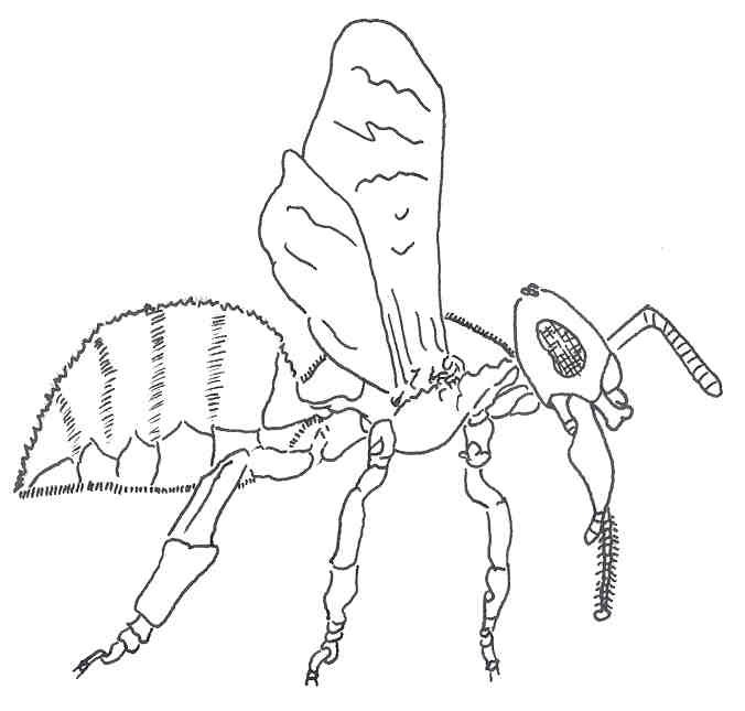 676x645 Outline Of Bee
