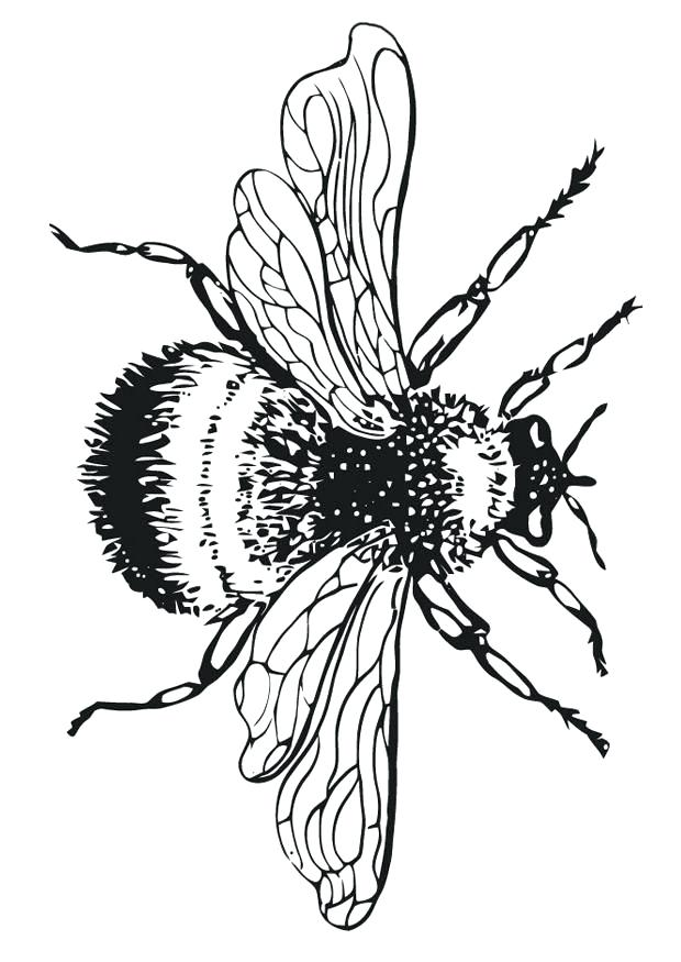 620x875 Stunning Stunning Bumble Bee Outline New Kids Coloring