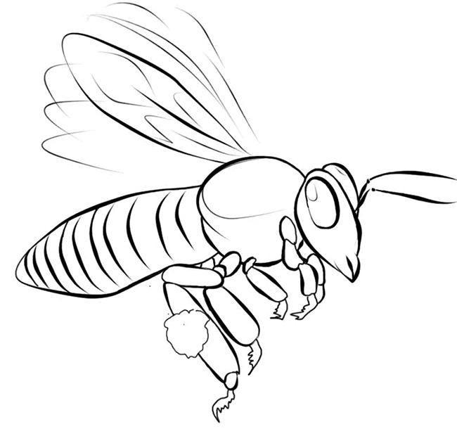 650x630 Bee Template