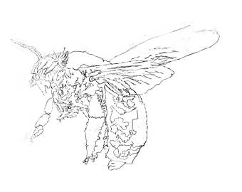 340x270 Bee Coloring Page Etsy