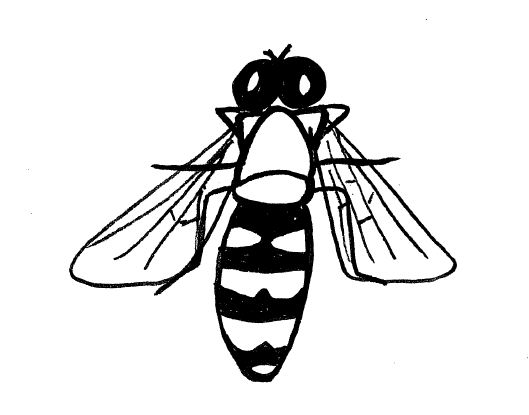 529x415 Simple Insect And Flower Line Drawings Standingoutinmyfield