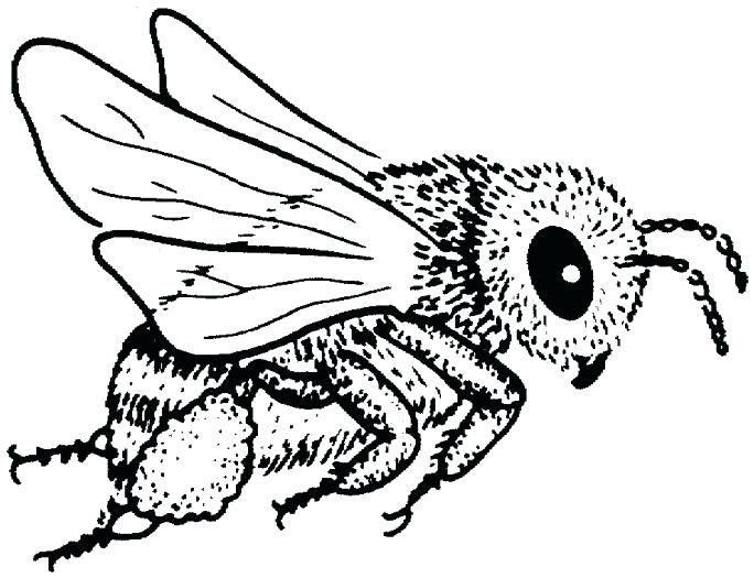 684x525 Bees Coloring Pages