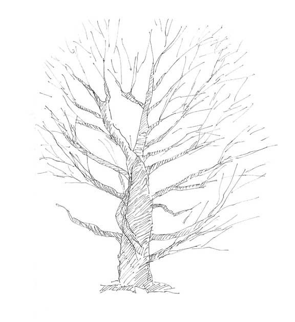 576x630 Bobbi Heath's Drawing With Paint Drawing Trees