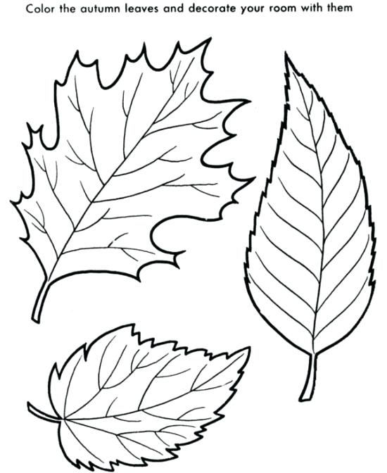 550x672 Fall Leaves Coloring Page Beech Tree Fall Leaf Coloring Page Fall