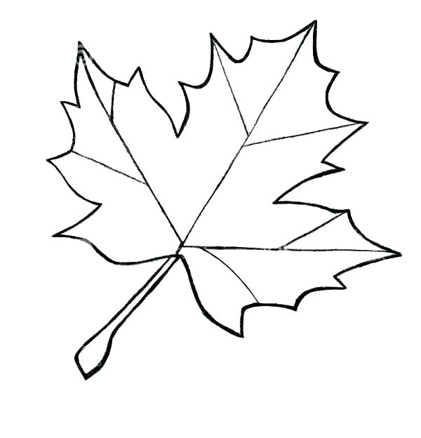 600x624 Pictures Of Leaves To Color Genesisar.co