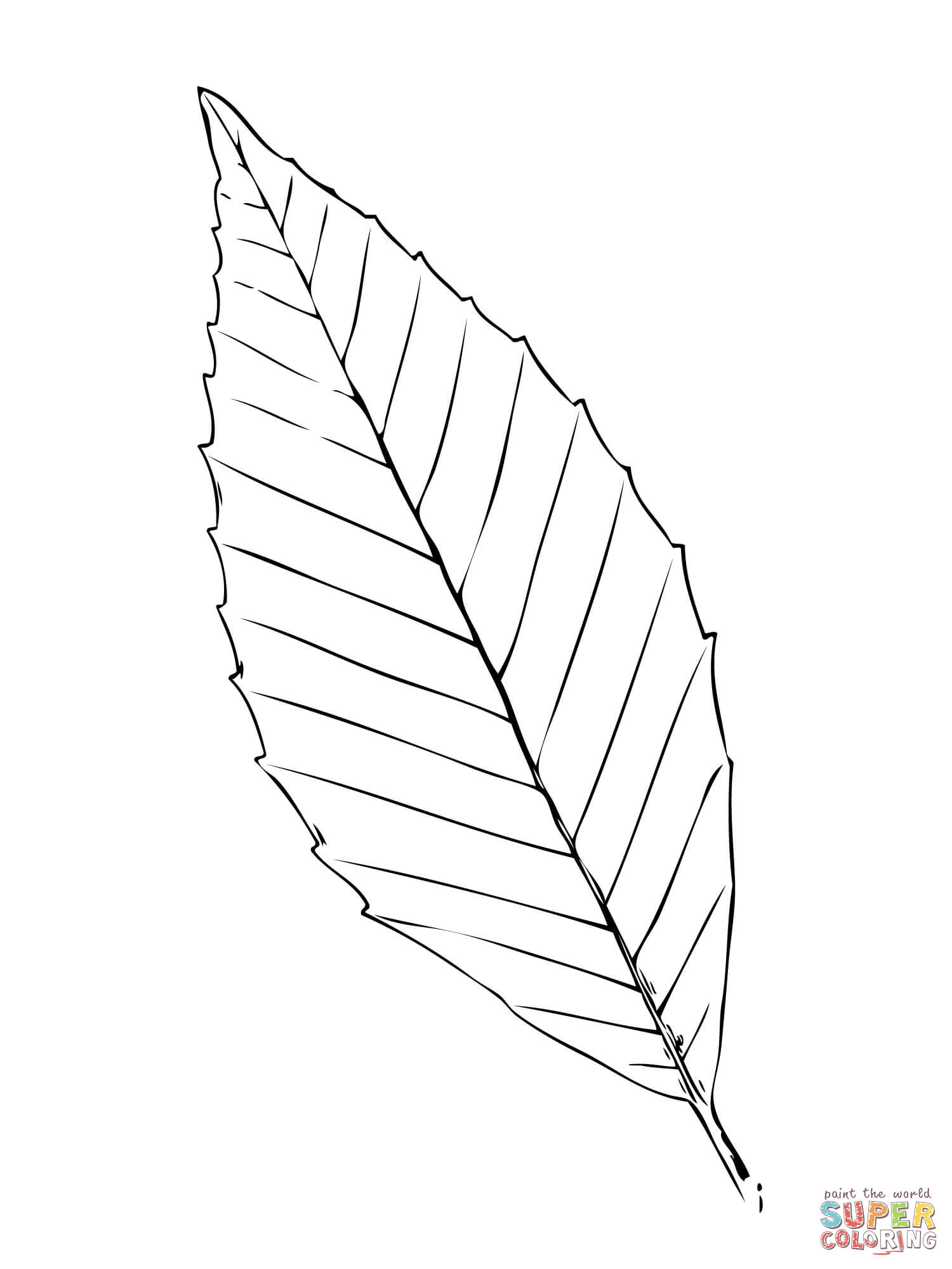 1500x2000 Beech Tree Leaf Coloring Page Free Printable Coloring Pages