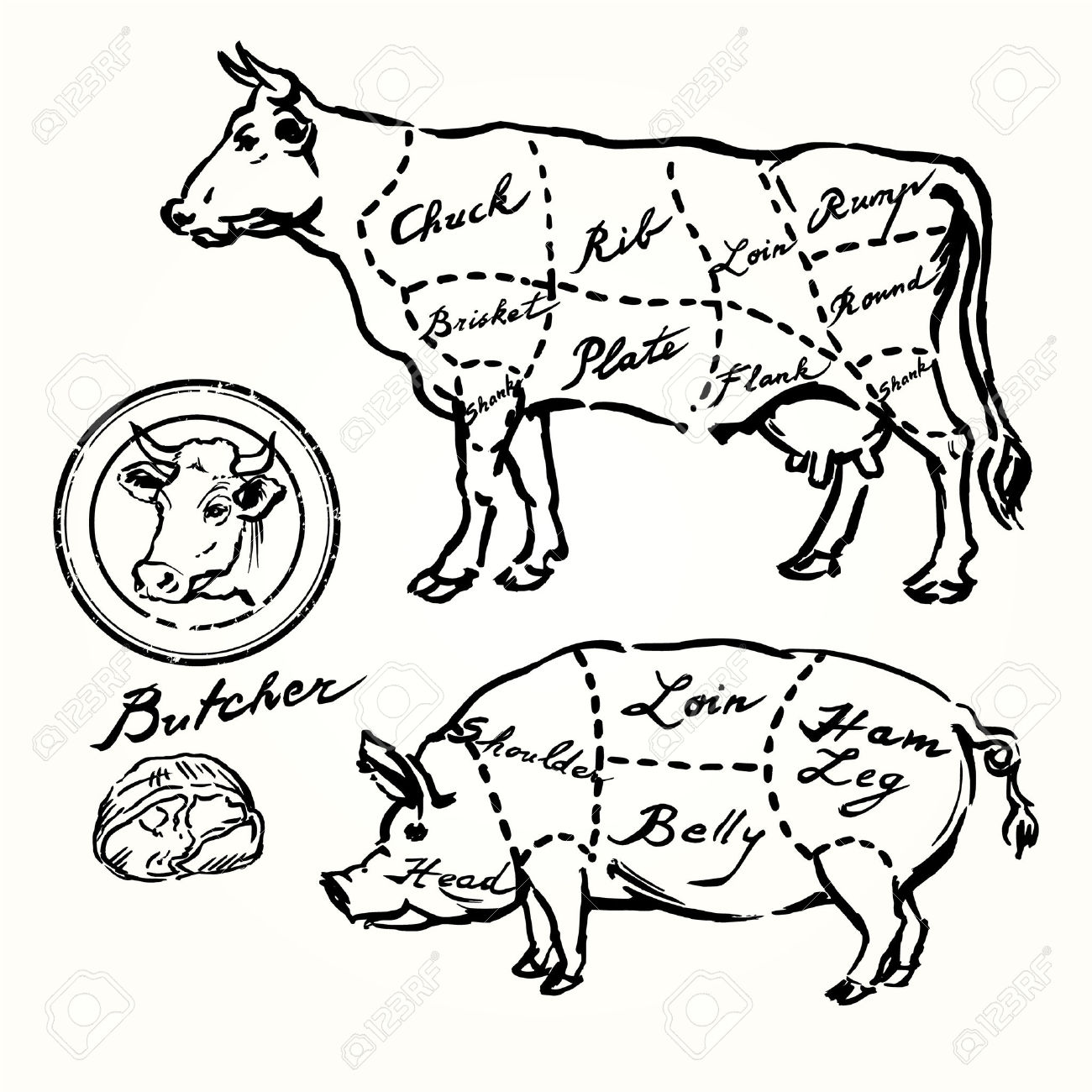 1300x1300 29452893 Pork And Beef Cuts Hand Drawn Set Stock Vector Beef Meat