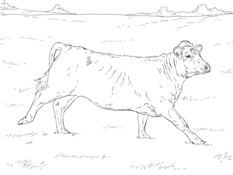 480x360 Cattle Coloring Pages Free Coloring Pages