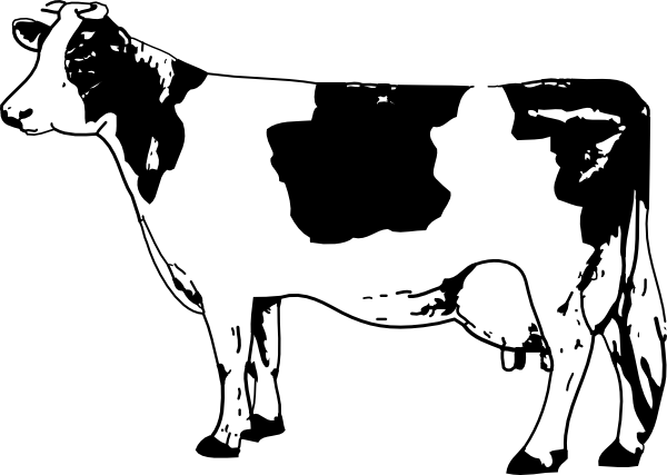 600x427 Free Line Drawings Cow Drawing Clip Art Engraving