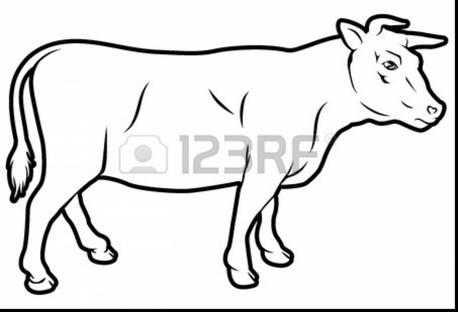 1485x1013 Great Beef Cow Coloring Page With Cow Coloring Page