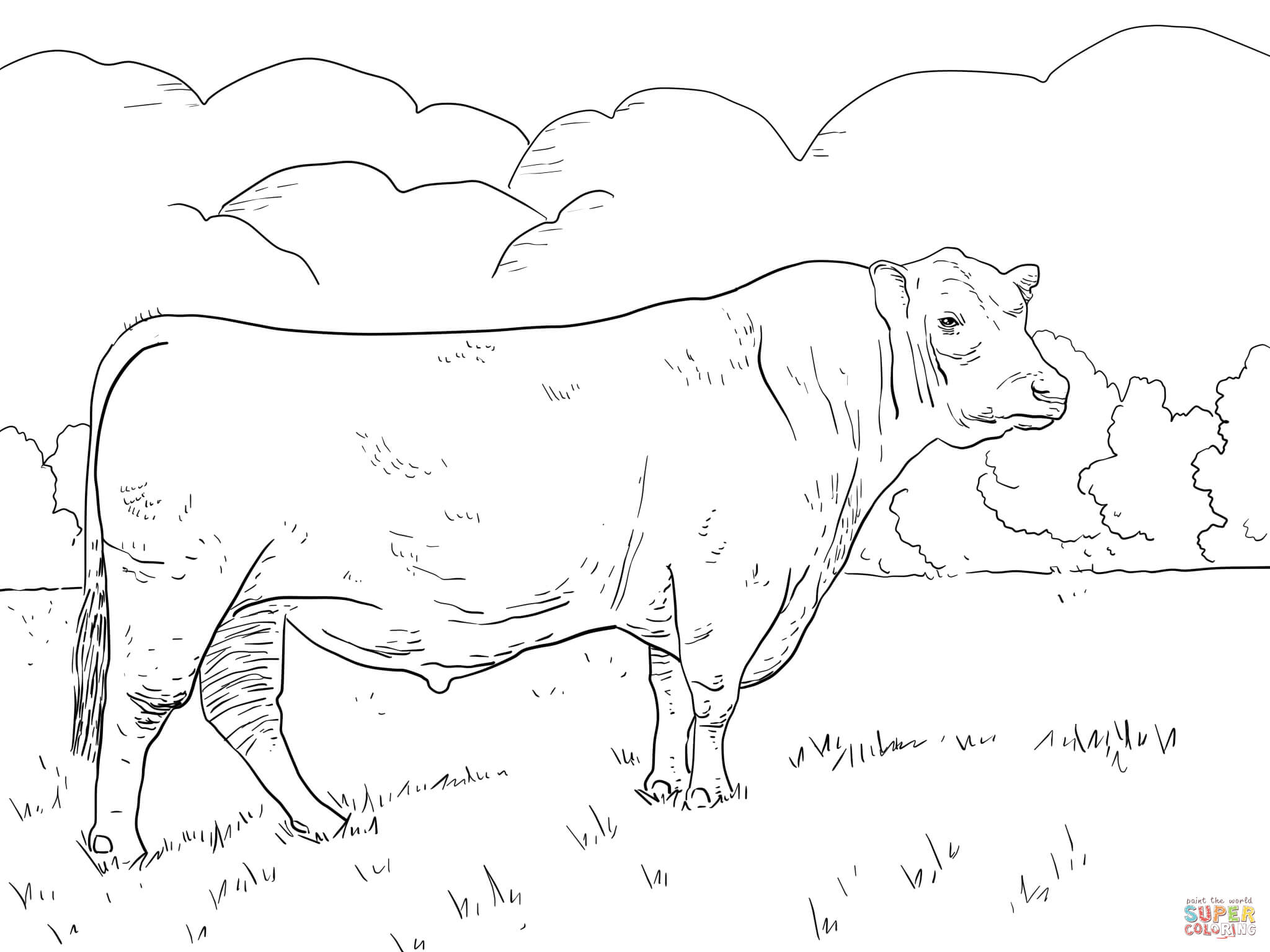 2048x1536 Angus Cattle Coloring Pages Colouring To Amusing Draw Paint Drawn