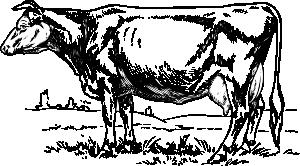 300x166 Cow 3 Clip Art