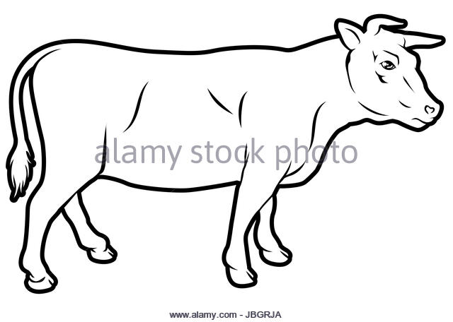 640x456 Premium Vintage Beef Bull Label Stock Photos Amp Premium Vintage
