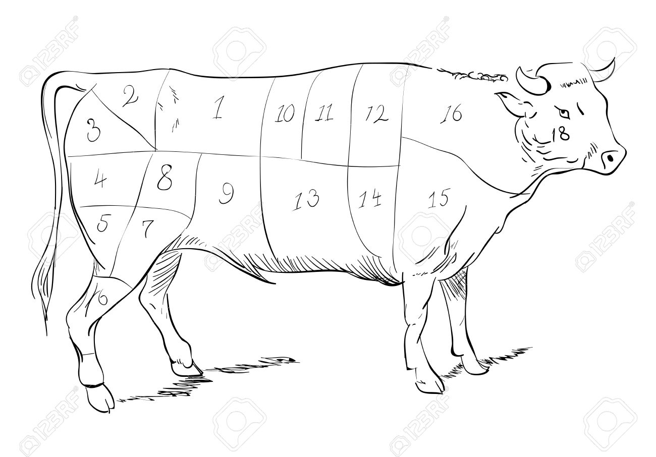 1300x906 Vector Drawing Of A Beef With Cutting Parts Royalty Free Cliparts