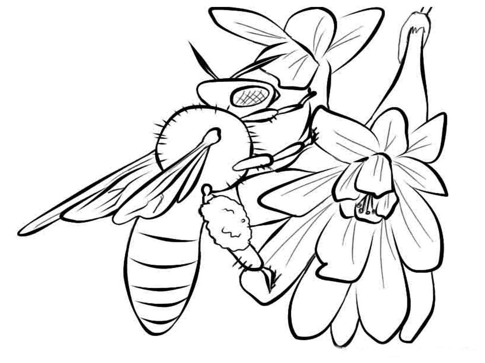 1600x1200 Drawn Bee Printable