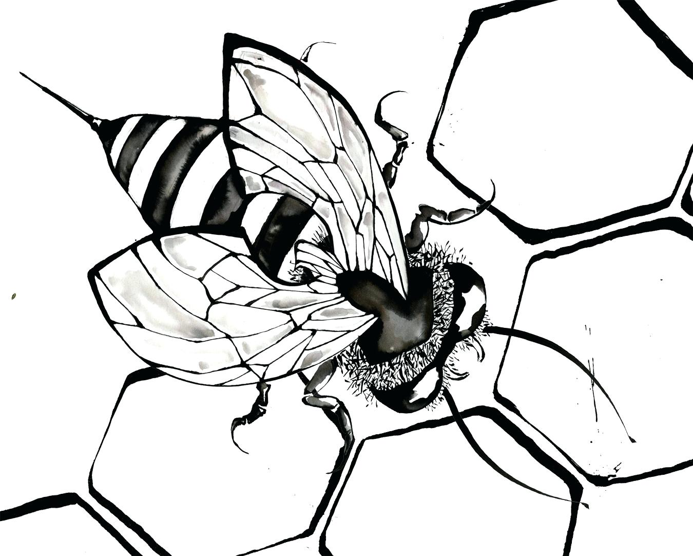 1350x1082 Coloring Honey Bee Coloring Pages Basic Fly Page To Drawing
