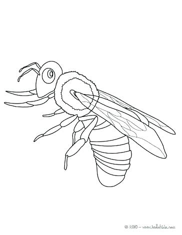 364x470 Honey Bee Coloring Page Cortefocal.site