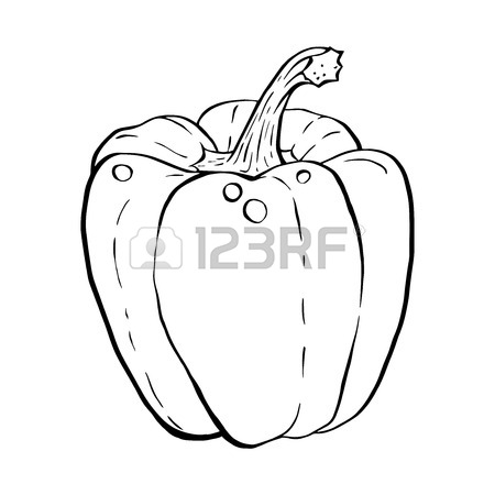 450x450 Outline Hand Drawn Sketch Of Paprika, Bell Pepper. Hand Drawn