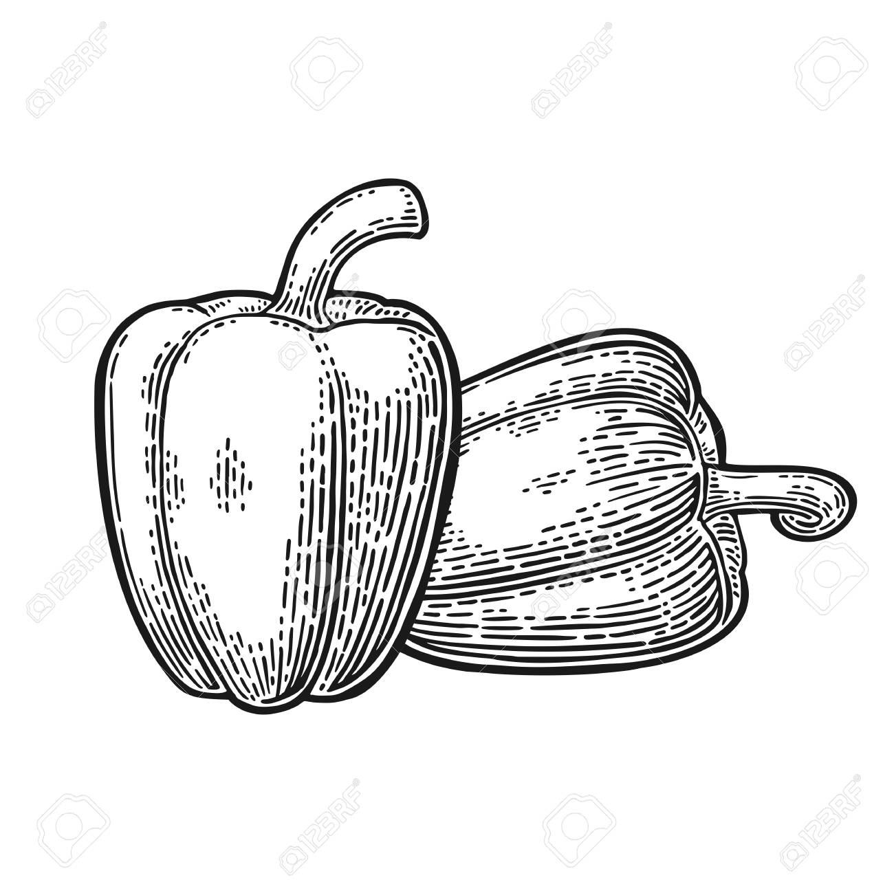 1300x1299 Two Sweet Bell Peppers. Vector Vintage Engraved Illustration