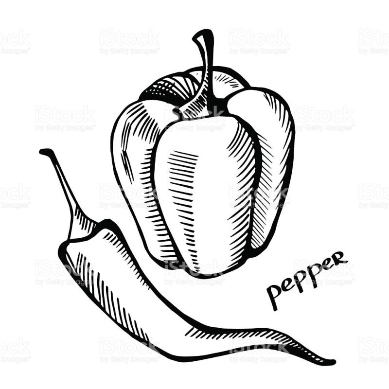 800x800 Bell Pepper Clipart Black And White