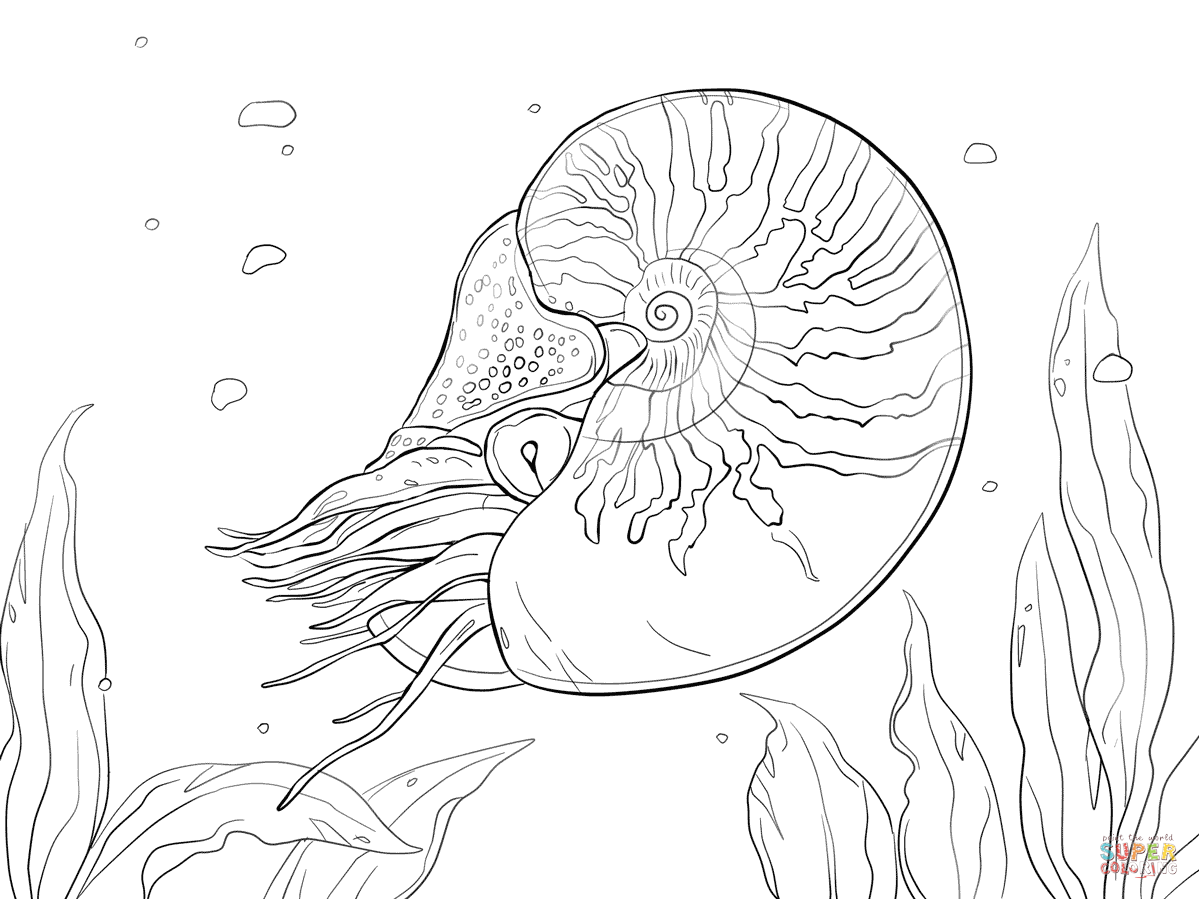 1199x899 Bellybutton Nautilus Coloring Page Free Printable Coloring Pages